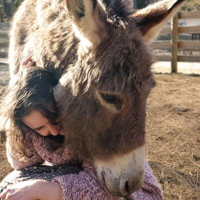 Donkey nuzzles a young guest, as if to give her a hug