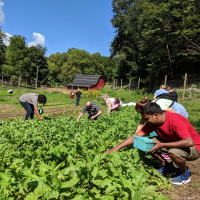 Guests harvesting vegetables from the retreat center farm